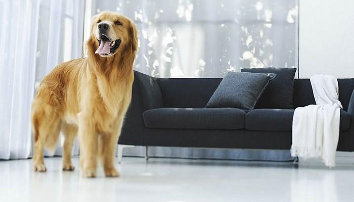 ¿Tiene una mascota? Cuide la decoración de su hogar